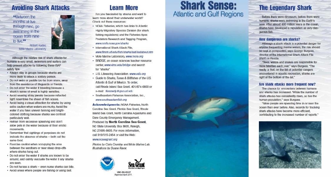 Shark-flyer
